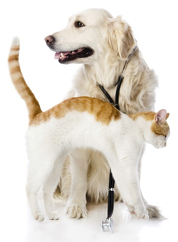 Dog and Cat 358X487